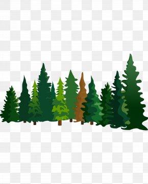 Cartoon Pine Material - Pine Fir Cartoon Spruce PNG