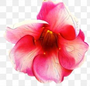 Iris Cattleya - Pink Flower Cartoon PNG