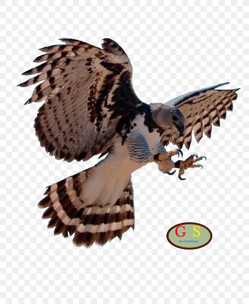 Bald Eagle Bird Harpy Eagle, PNG, 800x1000px, Bald Eagle, Accipitriformes, Animal, Beak, Bird Download Free