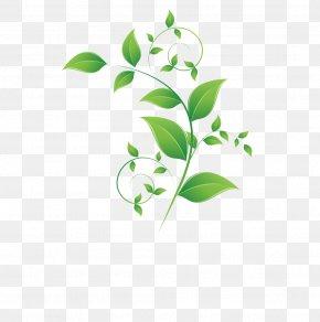 Leaf - Leaf Adobe Illustrator Green PNG