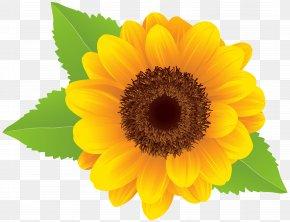 Sunflower Clip Art Image - Download Common Sunflower Clip Art PNG