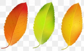 Three Fall Leaves Set Clipart Image - Leaf PNG