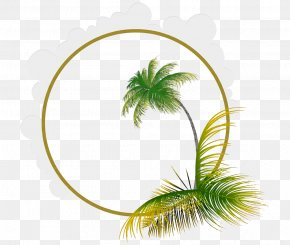 Coconut Leaf Frame Picture Material - Leaf Euclidean Vector Coconut PNG