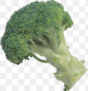 Broccoli - Broccoli Slaw Leaf Vegetable PNG