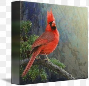 Cardinal Drawing - Gallery Wrap Canvas Art Printmaking Feather PNG