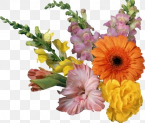 Flower - Border Flowers Desktop Wallpaper Clip Art PNG