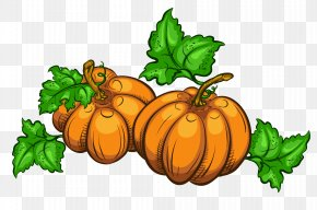 Transparent Pumpkins Clipart Picture - Thanksgiving Animation Giphy Clip Art PNG