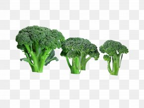 Green Healthy Food Broccoli - Broccoli Food Vegetable PNG