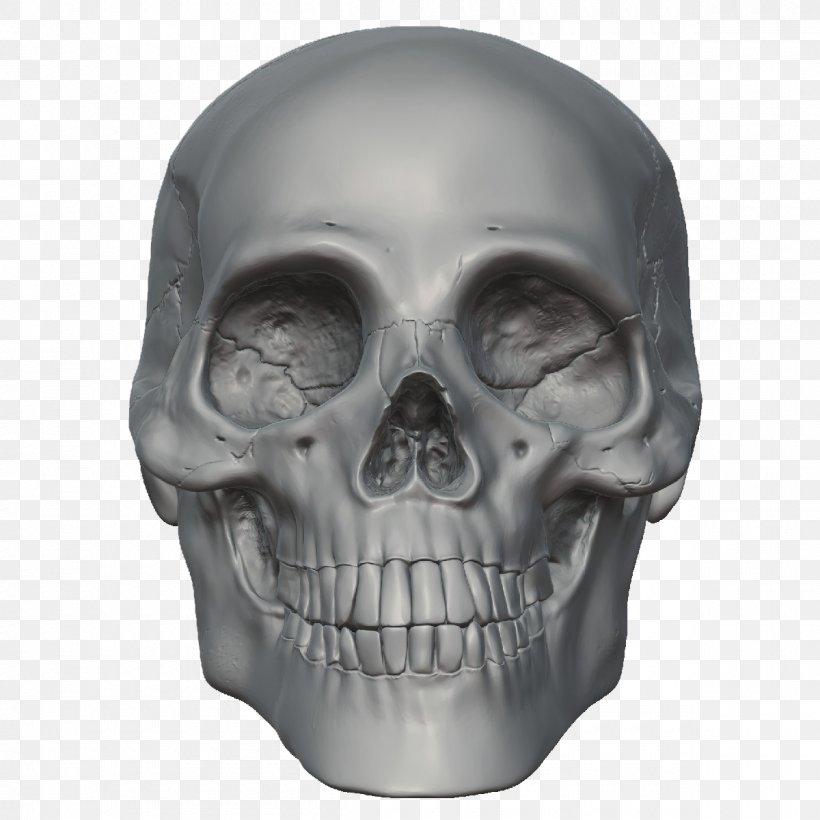 Skull Skeleton Head, PNG, 1200x1200px, Skull, Anatomy, Bone, Head, High Definition Video Download Free
