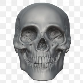 Skeleton Head Free Image - Skull Skeleton Head PNG