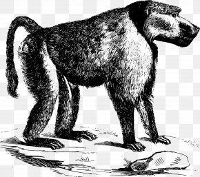 Dog - Dog Mandrill Cercopithecidae Chacma Baboon Primate PNG