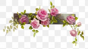 Flower Border Cliparts - Flower Vintage Roses: Beautiful Varieties For Home And Garden Clip Art PNG