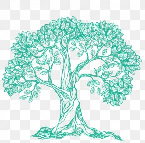 Tree - Branch Drawing Tree PNG