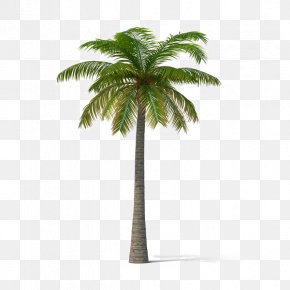 Tree - Asian Palmyra Palm California Palm Areca Palm Tree Mexican Fan Palm PNG