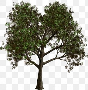 Trees - Tree Forest Clip Art PNG