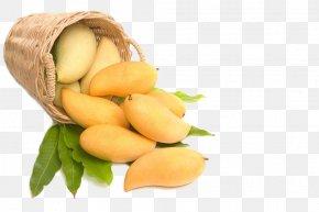 Mango - Juice Vesicles India Mango Alphonso PNG