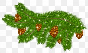 Transparent Pine Branch With Pine Cones Clipart - Pine Branch Clip Art PNG