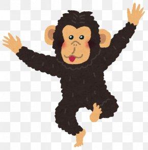 Chimpanzee - Common Chimpanzee Bonobo Homo Sapiens Primate Anthropoid Ape PNG