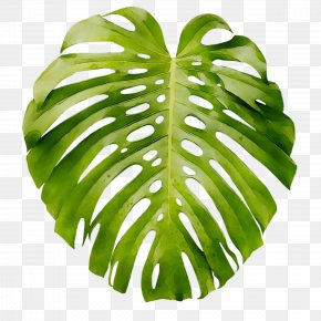 Leaf Swiss Cheese Plant Art Poster Wall Decal PNG