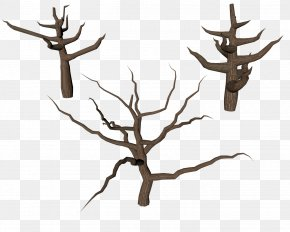 Tree Trunk - Tree Branch Trunk PNG