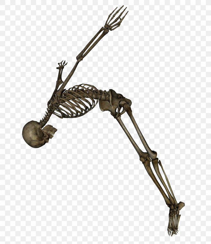 Human Skeleton Clip Art, PNG, 1500x1739px, The Skeleton And Muscles, Animation, Bone, Human Body, Human Skeleton Download Free