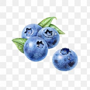 Sphere Food - Berry Blueberry Blue Bilberry Fruit PNG