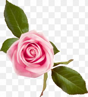 Quotation - Greeting & Note Cards Quotation Good Wish PNG