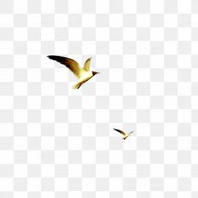 Flying Bird - Beak Yellow Wallpaper PNG