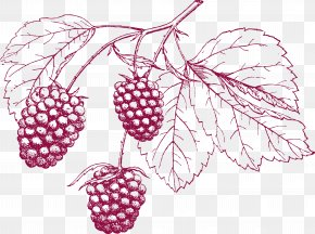 Cranberry Pencil Drawing - Drawing Grape Pencil PNG