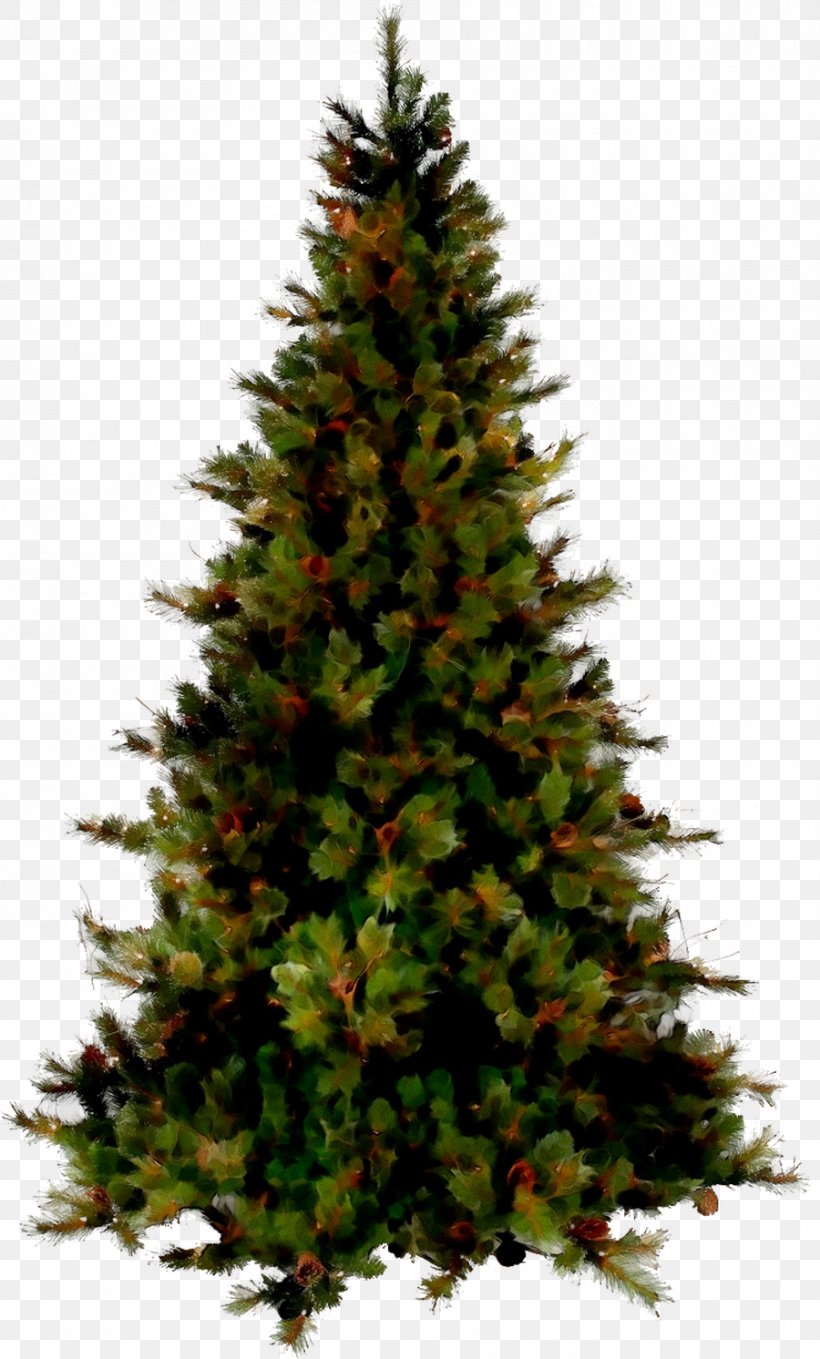 Christmas Tree Image Christmas Day Vector Graphics, PNG, 900x1492px, Christmas Tree, American Larch, Balsam Fir, Biome, Branch Download Free