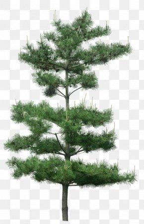 Green Pine Tree Decoration Pattern - Tree Pine PNG