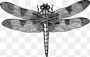 Vector Dragonfly - Dragonfly Royalty-free Clip Art PNG
