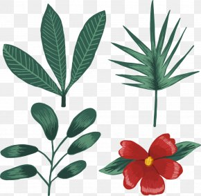Tropical Plants - Euclidean Vector Tropics PNG