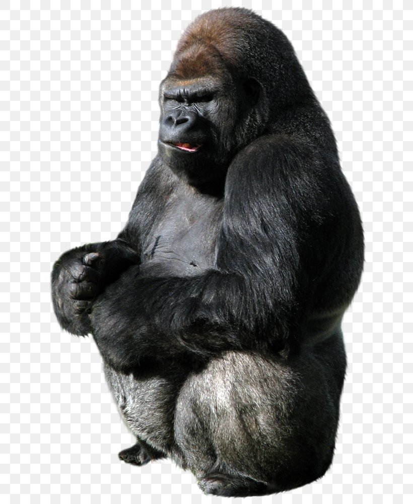 King Kong Western Gorilla Donkey Kong Clip Art, PNG, 686x1000px, King Kong, Camera, Camera Lens, Chimpanzee, Common Chimpanzee Download Free