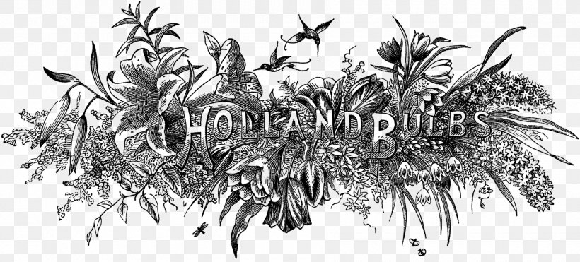 Drawing Engraving Blog Png 1800x815px Drawing Black And White Blog Branch Cabbage Download Free