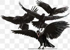 Bird - Bird Common Raven The Raven Crow Eagle PNG