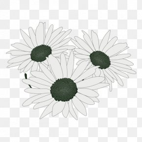 Flower - Common Daisy Flower Bouquet Floral Design Cut Flowers PNG