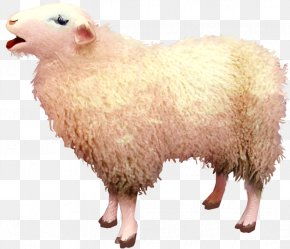 Goat Free Download - Sheep Goat Clip Art PNG