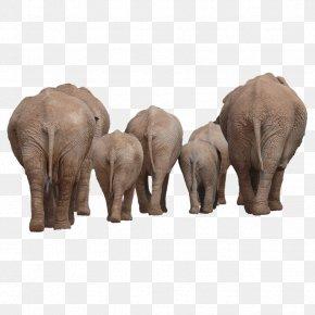 Elephants Back - African Bush Elephant Indian Elephant Clip Art PNG