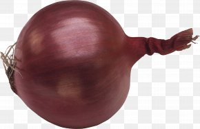 Onion Image - Red Onion Clip Art PNG