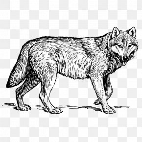 Wolf - Dog Coloring Book Horse Animal Lion PNG