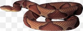 Snake Image Picture Download Free - Snake Clip Art PNG