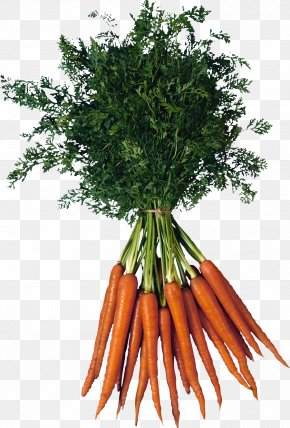 Carrot Image - Raised-bed Gardening Vegetable Carrot PNG