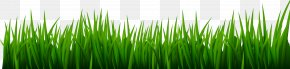 Grass Clip Art Image - Vetiver Wheatgrass Green Commodity Wallpaper PNG