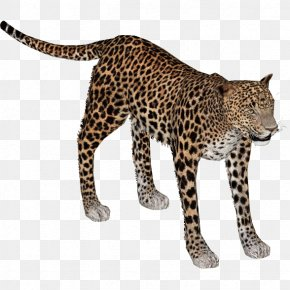 Leopard - African Leopard Lion Indian Leopard Cheetah Felidae PNG