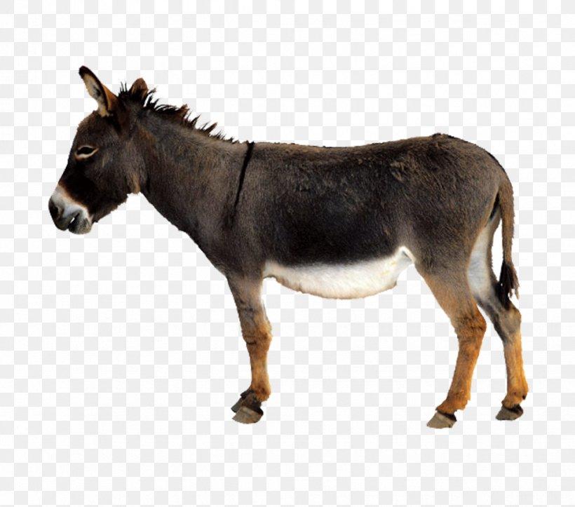 Donkey Mule Chicken, PNG, 976x861px, Donkey, Chicken, Fauna, Fundal, Horse Like Mammal Download Free
