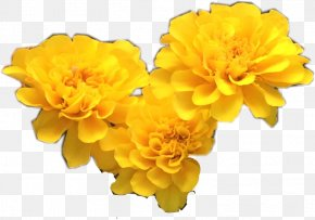 X Ray Flowers - Yellow Cut Flowers Petal PNG