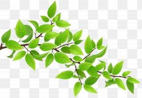 Green Branch Transparent Clip Art Image - Branch Clip Art PNG
