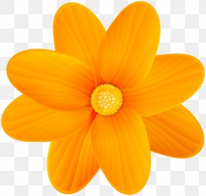 Orange Flower Clip Art Image - Orange Blossom Flower Clip Art PNG