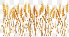Wheat Seeds - Ear Cereal Common Wheat Clip Art PNG